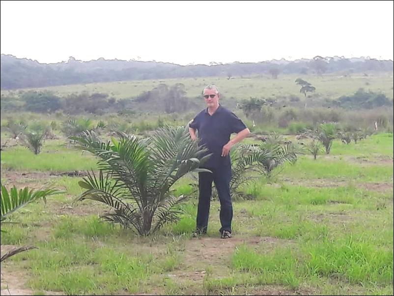 Plantation de palmiers à huile au 6 décembre 2020